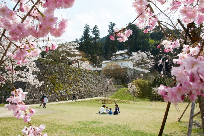 Cherry blossoms add to the blues of the beach in Takeno and to the historic landscapes of Izushi