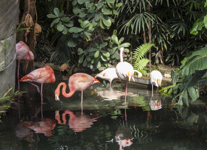 Group of pink flamingos in Parc Phoenix in Nice photo via DepositPhotos