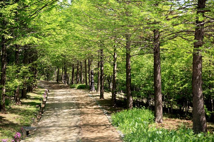 Hanbat Arboretum photo via VisitKorea