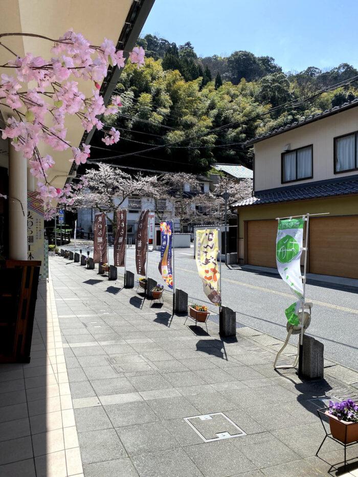 Kinosaki Onsen Cherry Blossom Season