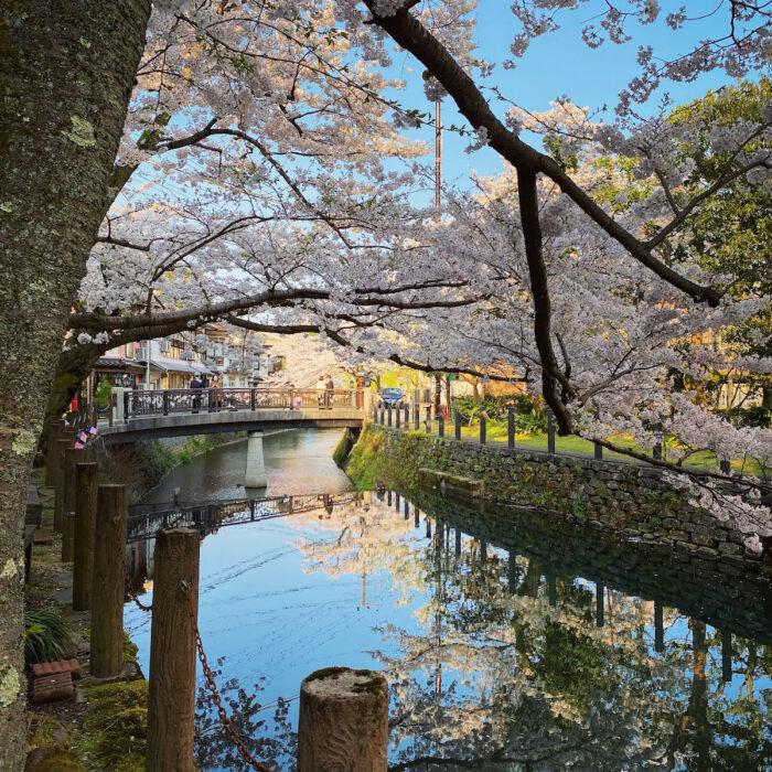 Kinosaki Onsen during the cherry blossom season