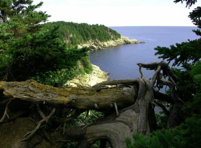 Cape Breton Island by Jurek Durczak via Wikipedia CC