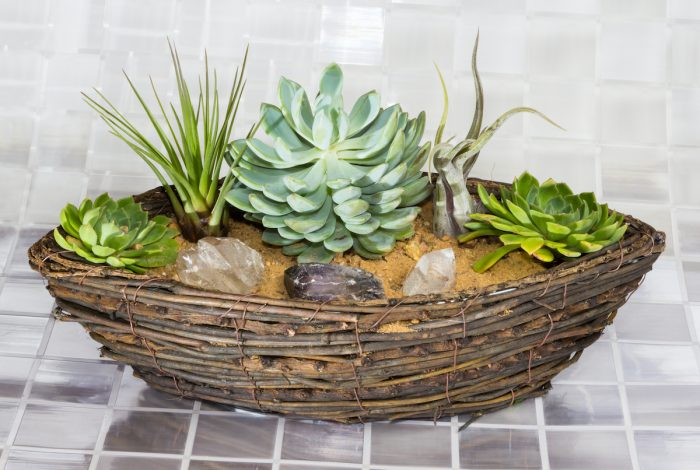 Echeveria and Tillandsia growing in a basket via DepositPhotos