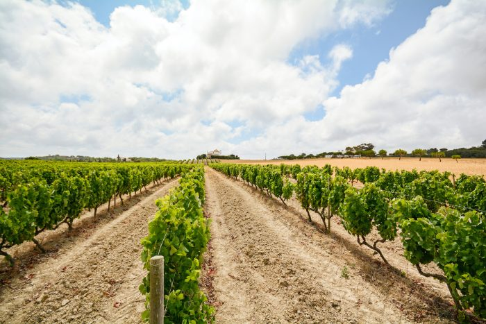 Old vineyards with red wine grapes in the Alentejo wine region near Evora, Portugal photo via Depositphotos