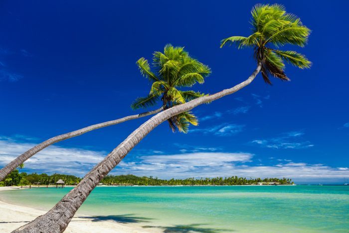 Palm trees hanging over stunning lagoon on Fiji Islands photo via Deposit Photos