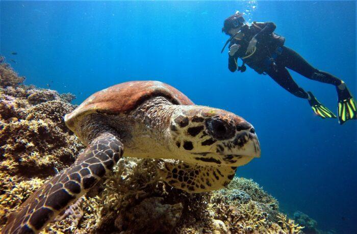 Sea Turtle at El Nido Resorts