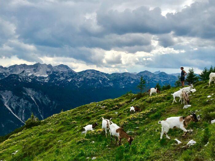 Triglav National Park photo by Arno Vermote via nsplash