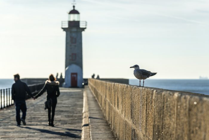Mew on a breakwater with Felgueiras Lighthouse in Porto photo via Depositphotos