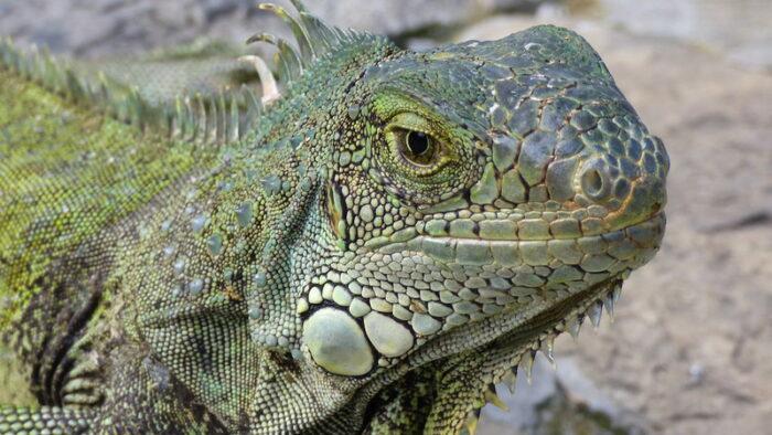 Parque de las Iguanas by Subversion Visual via Flickr CC