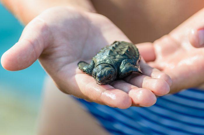 Sea Turtle Hatchery via Depositphotos