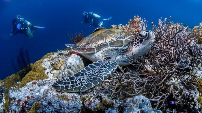 Surprisingly Spectacular Diving Philippines