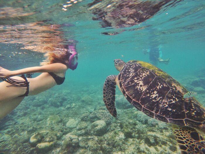 Swim with the turtles of Apo Island