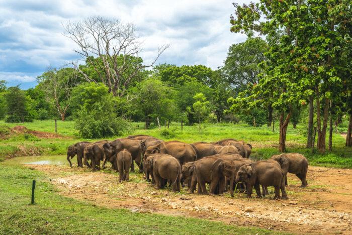 Udawalawe Elephant Transit Home photo via Depositphotos