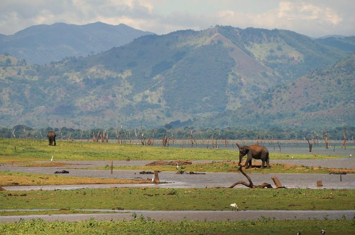 Udawalawe National Park by Pierre Andre Leclercq via Wikipedia CC
