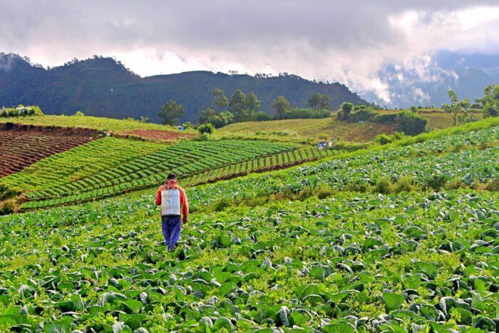 Agroturismo en la provincia de la montaña de Bauko