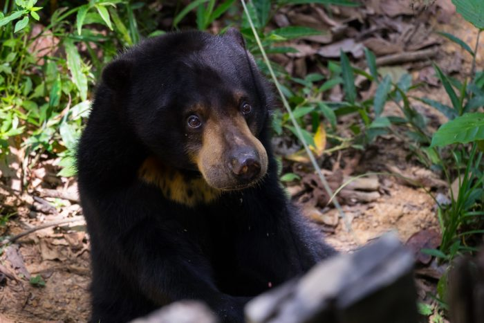 Bornean Sun Bear Conservation Center by Andrea Schieber via Flickr CC