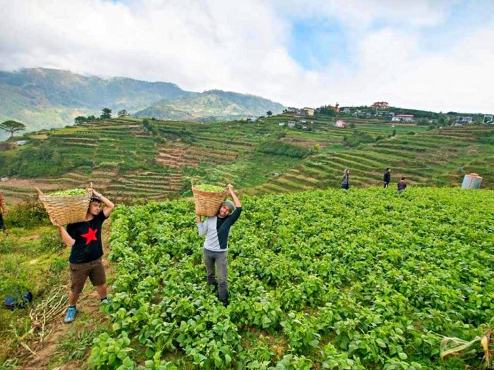 Granja Buguias Benguet - El circuito de turismo agrícola de Benguet y la provincia de montaña