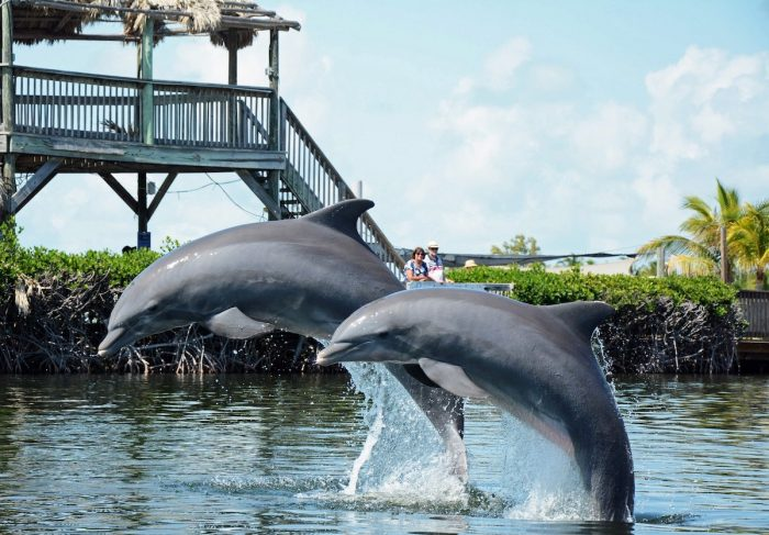 Dolphin Research Center in Florida Keys Photo via FB Page