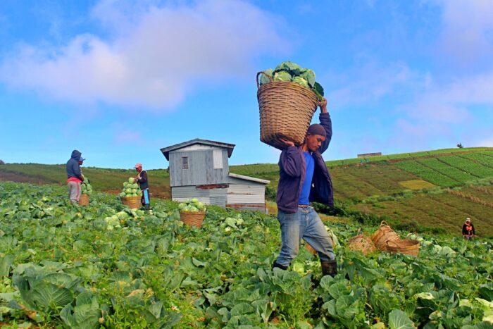 Turismo agrícola en la provincia montañosa de Bauko