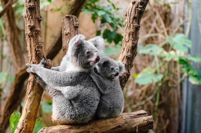 Jirrahlinga Koala and Wildlife Sanctuary