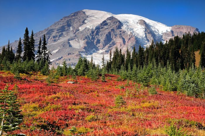 Mount Rainier National Park Photo via Depositphotos