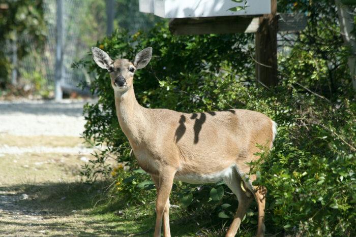 National Key Deer Refuge photo via Depositphotos