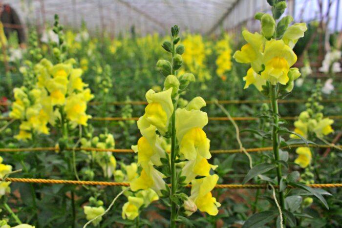 Granja de flores Northern Blossoms
