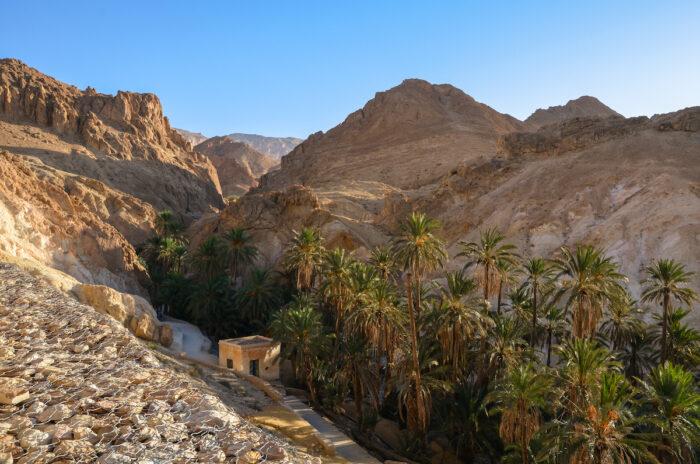 Oasis in the Sahara next to the destroyed settlement, Chebika, Tunisia Photo via Depositphotos