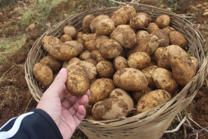 Patatas en Bauko