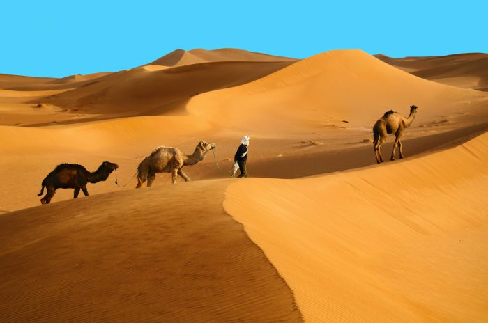 Indigenous Berber man with dromedary camels traveling in Sahara desert photos via Depositphotos