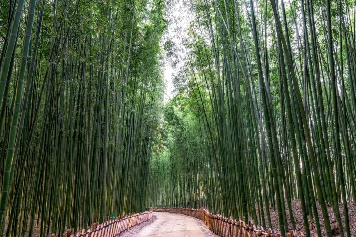 Taehwa River Bamboo Forest in Ulsan via Depositphotos