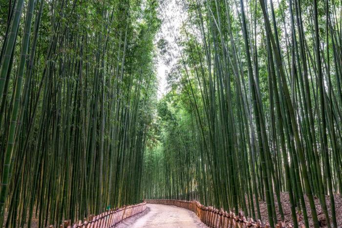 Taehwa River Bamboo Forest in Ulsan via Depositphotos