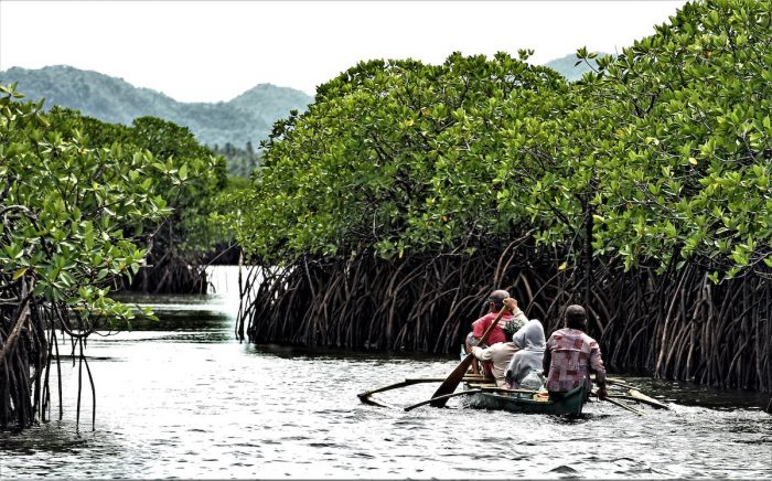 Del Carmen's mangrove forest by Erwin Mascarinas image via DOT