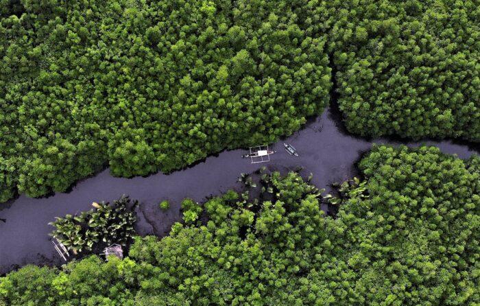 Del Carmen Mangrove Forest by Erwin Mascarinas photo via DOT