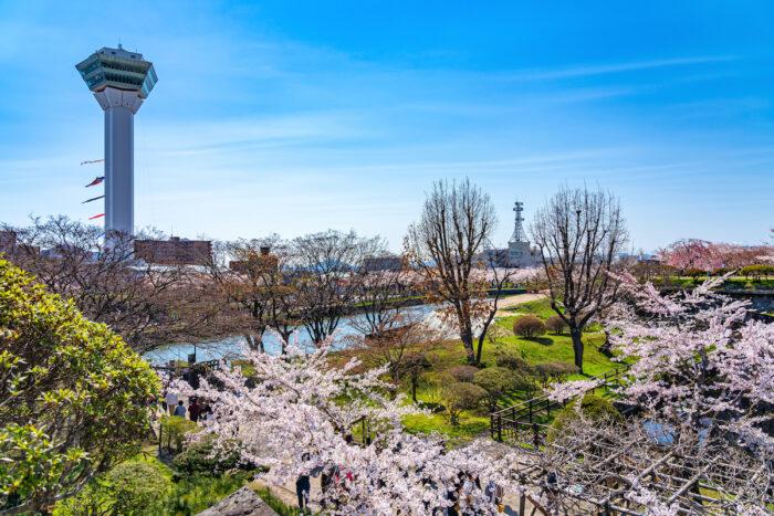 Goryokaku Park Tower in springtime photo via Depositphotos