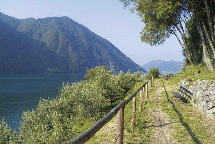 Olive Grove Trail of Gandria by Luganoregion.com