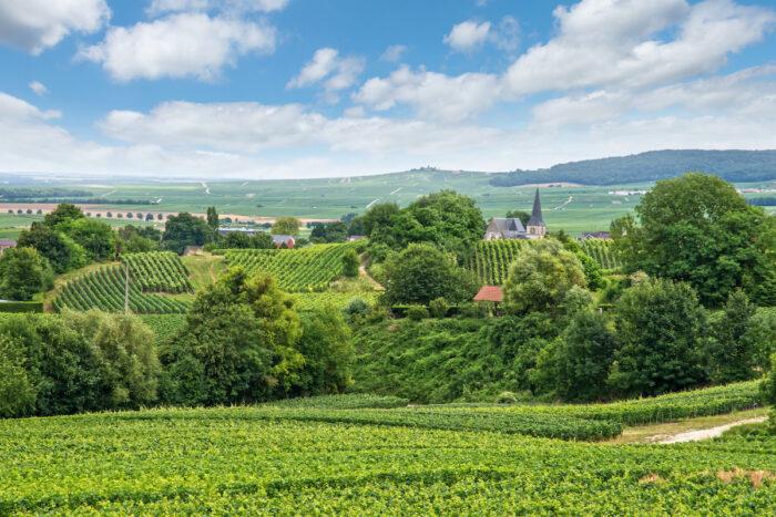 Vineyard landscape, Montagne de Reims, France photo via Depositphotos