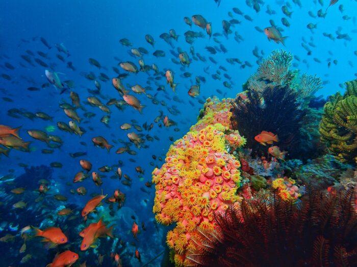 Anilao Dive Spot by Penn Delos Santos
