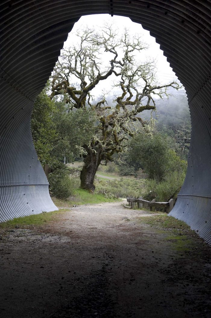 Bay Area Ridge Trail Tunnel to Alpine Lake by Joel Henner via Wikipedia CC