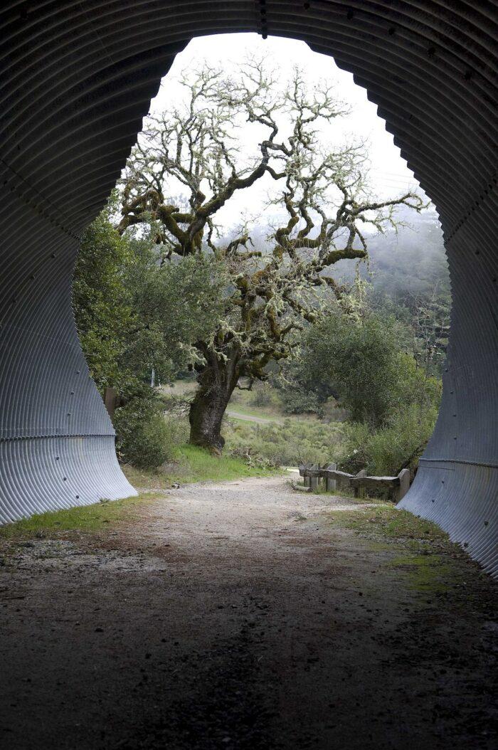 Bay Area Ridge Trail Tunnel to Alpine Lake by Joel Henner via Wikipedia CC