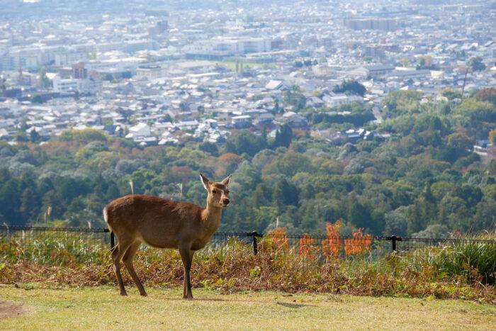 Beautiful nature deer in Nara park photo via Depositphotos