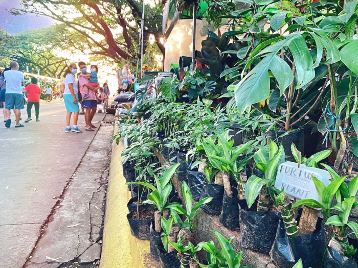 Best Places to buy indoor plants in Metro Manila