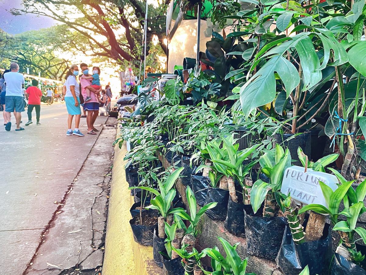 Quezon City Memorial Circle Plant Market: Where to buy Houseplants in Metro Manila?