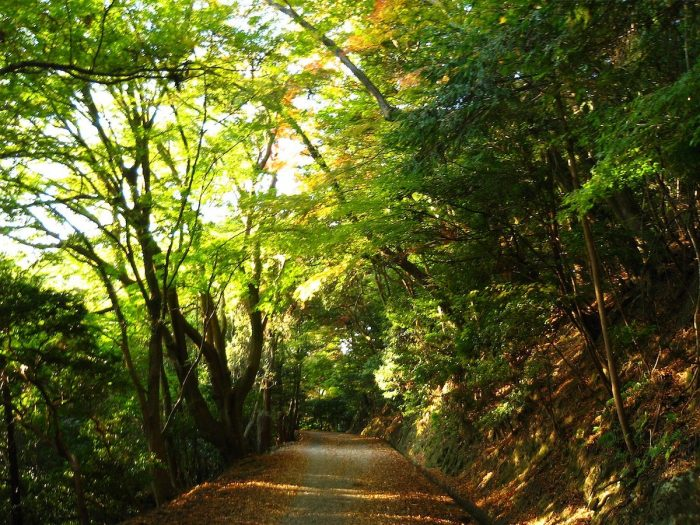 Kasugayama Primeval Forest by Vera46 via Wikipedia CC