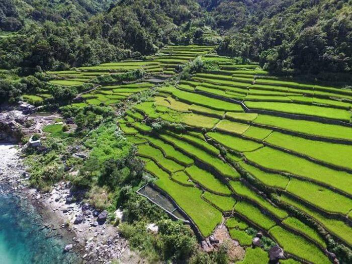 Kili Rice Terraces photo via Abramazing Touris FB Page