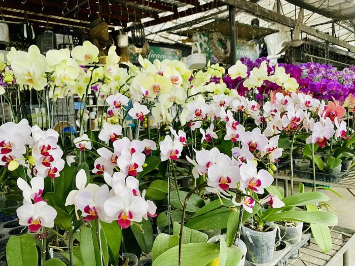 Orchid Shops at Quezon City Circle Plant Market