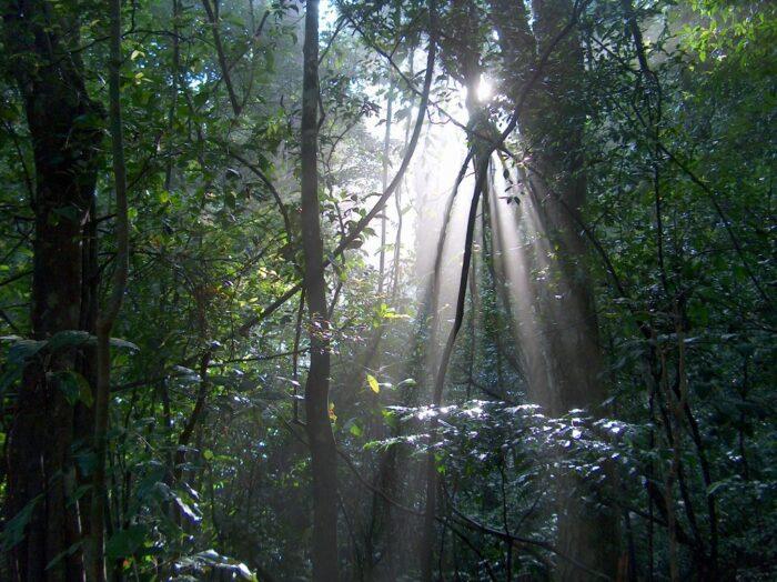 Reserva forestal de Udawattakele por Nyanatusita a través de Wikipedia CC