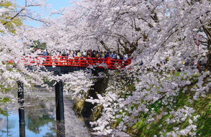 Cherry blossoms at Hirosaki Park photo via Depositphotos