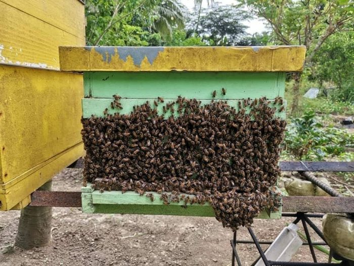 Milea Bee Farm photo via FB Page