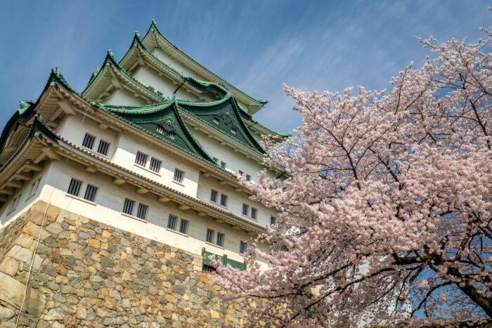 Nagoya Castle Cherry Blossoms photo via Depositphotos
